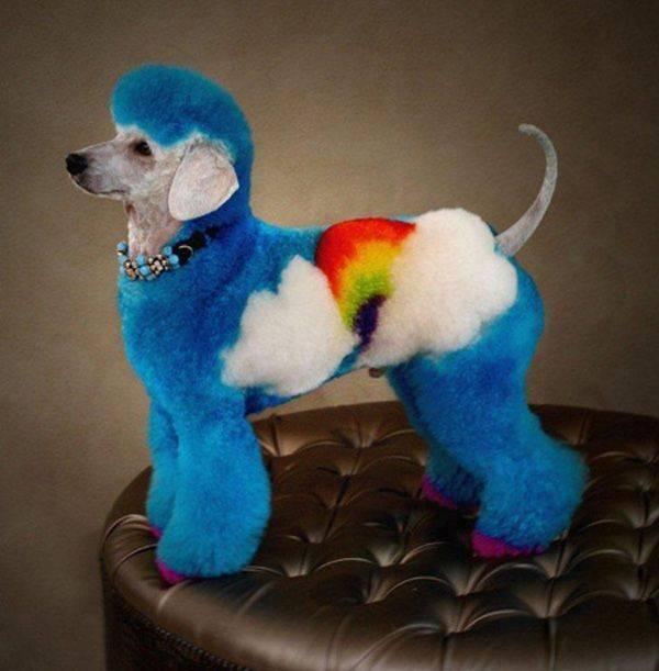 gay-poodle